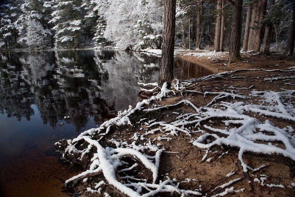 """Square root"", Loch Garten"