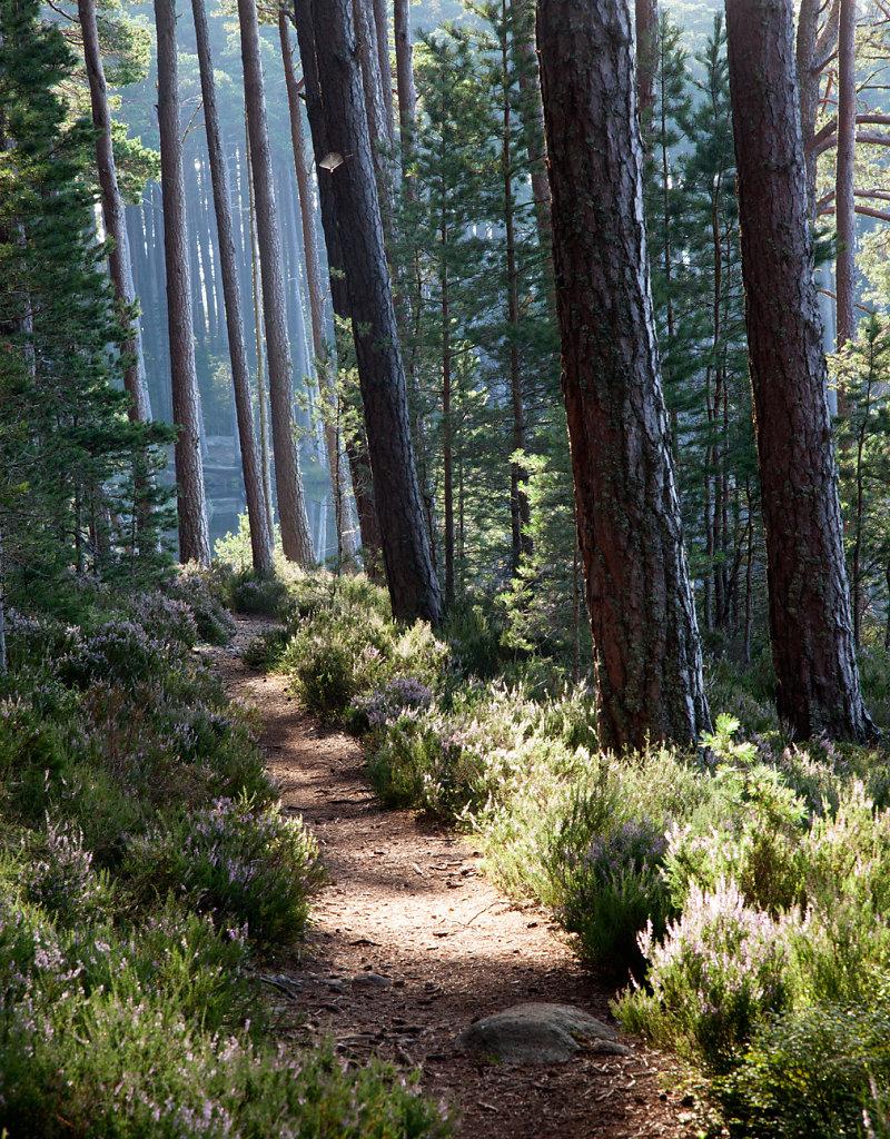 Basking pines