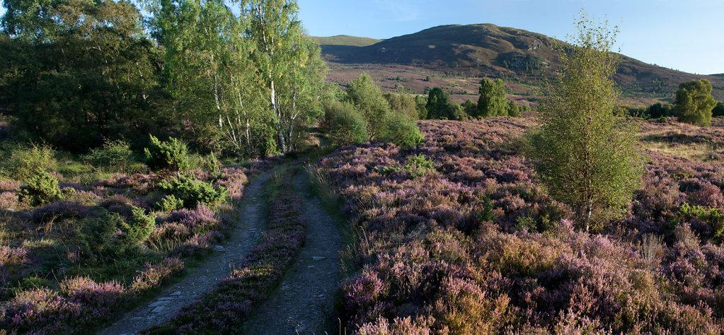 Dell bog heather