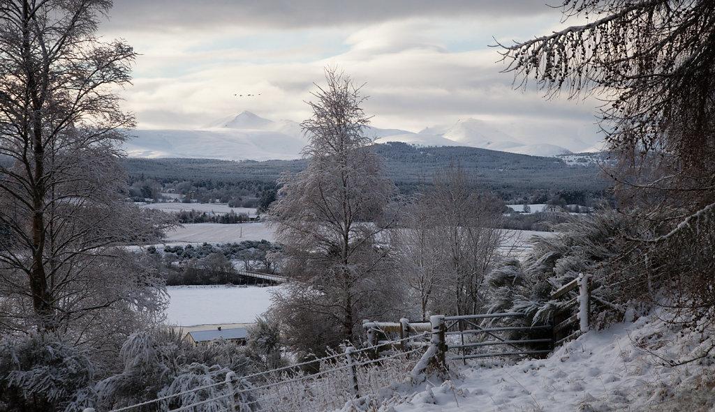 Winter Swan song